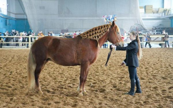виставка коней