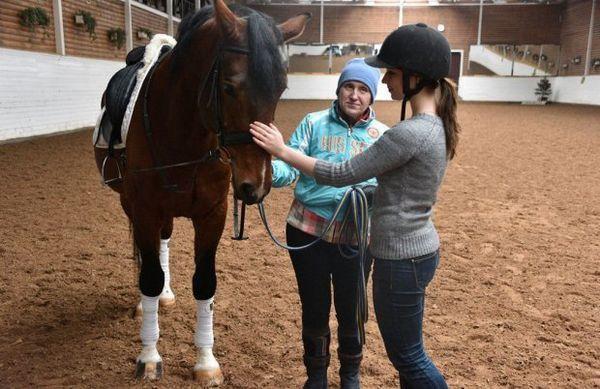 Знайомство з конем
