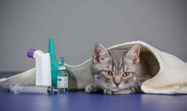 Кот хворіє