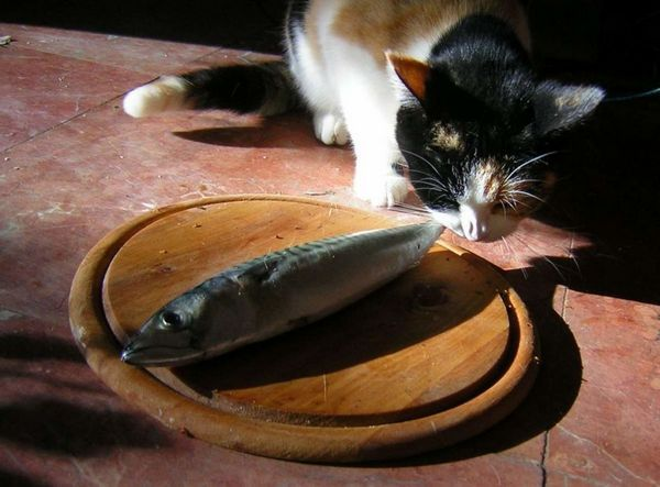 Кот їсть рибу