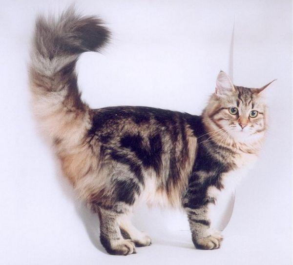 Как котките и котките използват езика на тялото за общуване?
