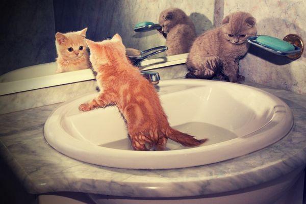 V akom veku sa dá mačiatko kúpať?