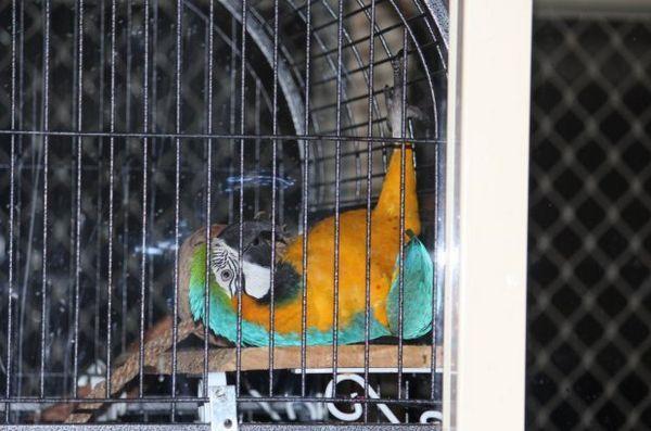 Папуга в клітці