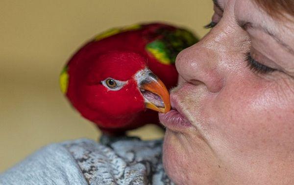Папуга і людина