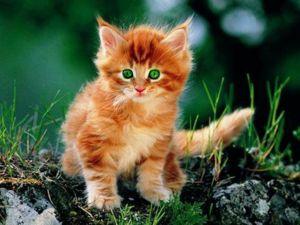 Можна назвати кошеня відповідно до ваших асоціаціями