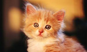 Ім`я для кошеняти має приємно звучати і не викликати негативних емоцій