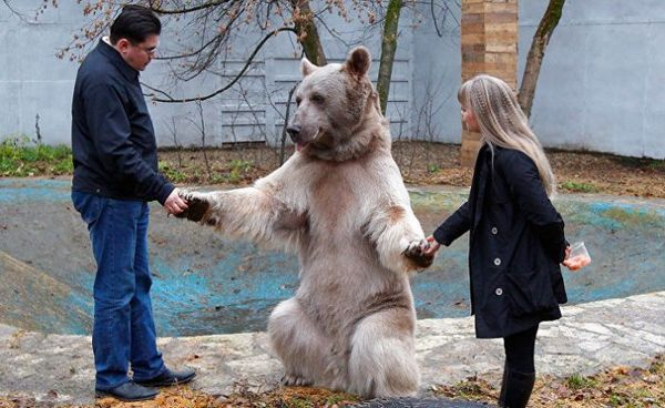 Ako žije medveď v bežnej rodine?