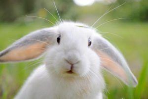 Čo môžete nazvať králikom?