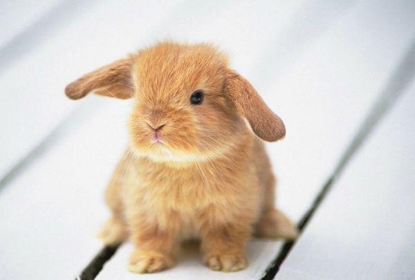 братик Кролик