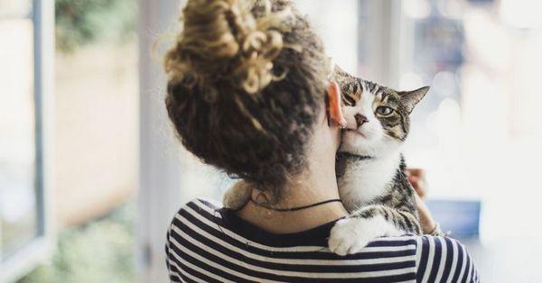 Дружба людини і кішки