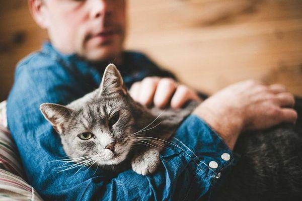 Кішка на руках у господаря