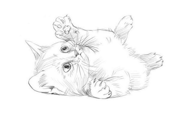 грайливий кошеня