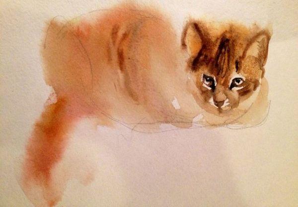 Малюнок кота аквареллю