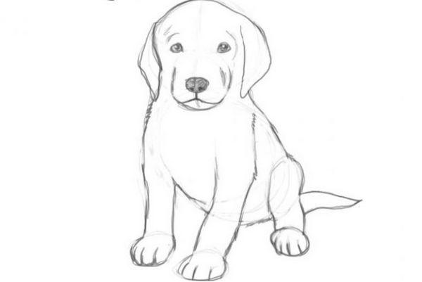 Малюнок собаки олівцем