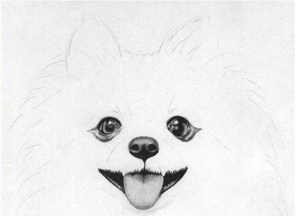 Промальовування морди собаки