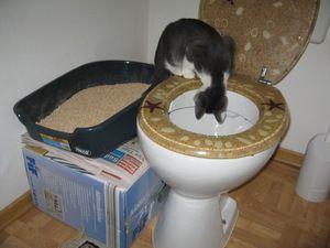 Як навчити кота до унітазу