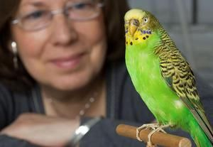 Як самим навчити папугу гвооріть