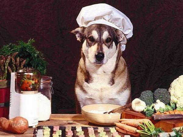 харчування собаки