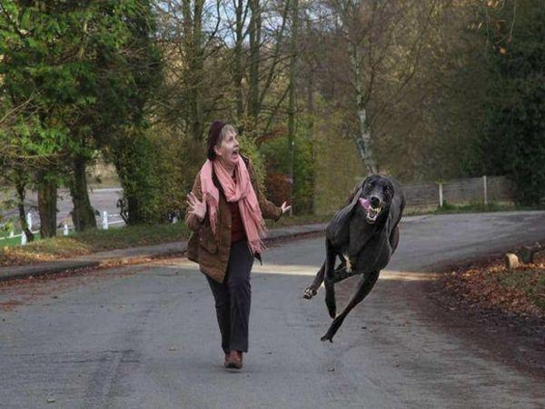 Прогулянка із собакою