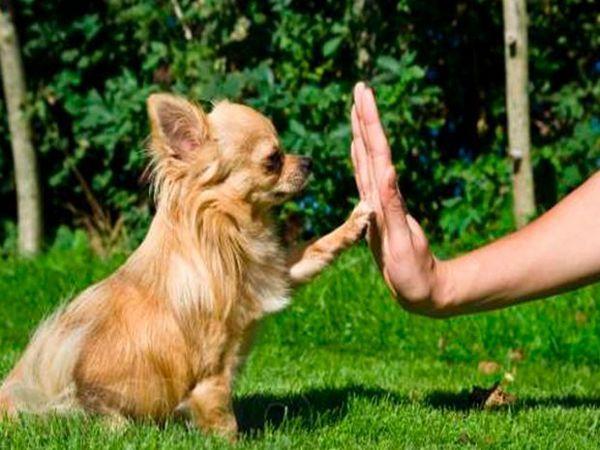 дресирування собаки