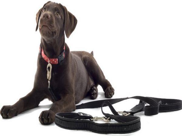 Нашийник і повідка для собаки