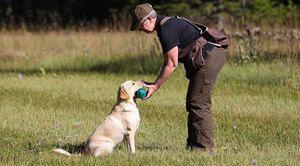 Як правильно вчити собак командам