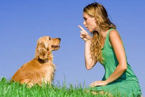 Як привчити собаку
