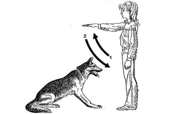 Як віддавати собаці команди