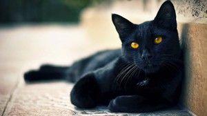 Імена для чорних котів