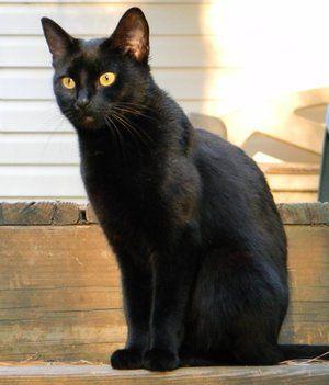 Кличка для чорного кота