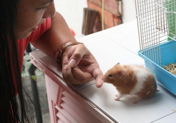 Хом`як нюхає палець