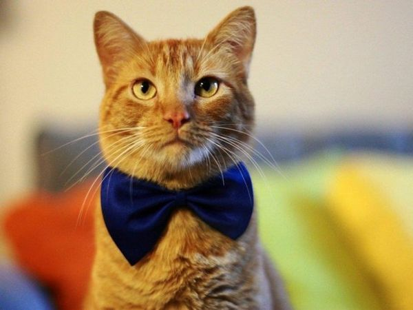 Рудий кошеня-хлопчик