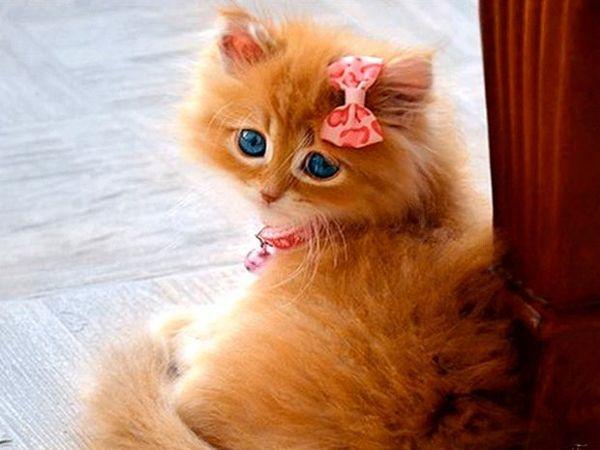 Рудий кошеня-дівчинка