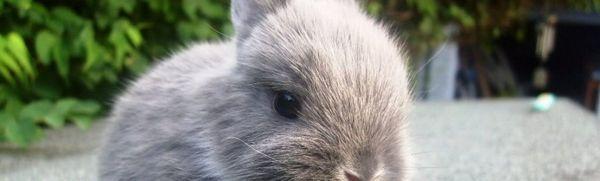 Ako pomenovať králika: originálne nápady na prezývky pre domáce zvieratá