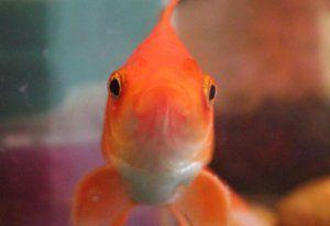 Какво да наречем риба: момче и момиче