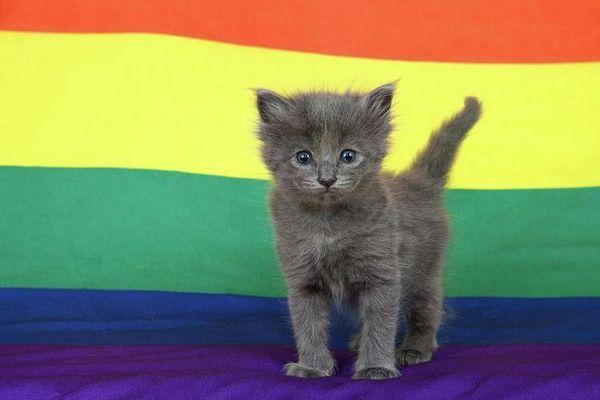 Сіре кошеня на тлі кольорових смуг