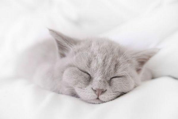 Сіре кошеня спить