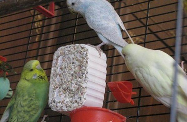 Мінеральний камінь для папуг