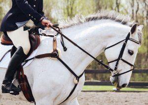 Ako trénovať koňa na jazdu: užitočné tipy