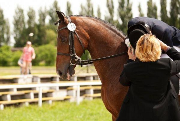 Верхова їзда на коні