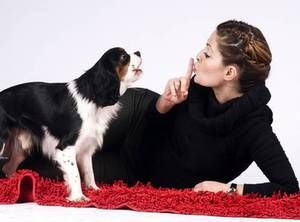 Як відучити собаку гавкати будинку - корисні поради