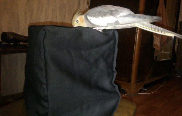 Клітка для перевезення папуги