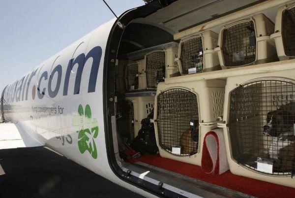 Тварини в літаку
