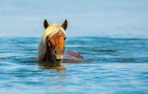 Як плавають коні