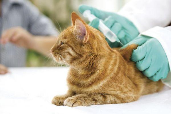 Котешка ваксинация