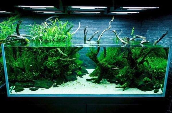 Вода в акваріумі