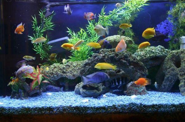 Рибки в акваріумі