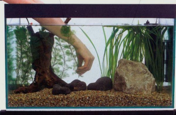 Висадка рослин в акваріум