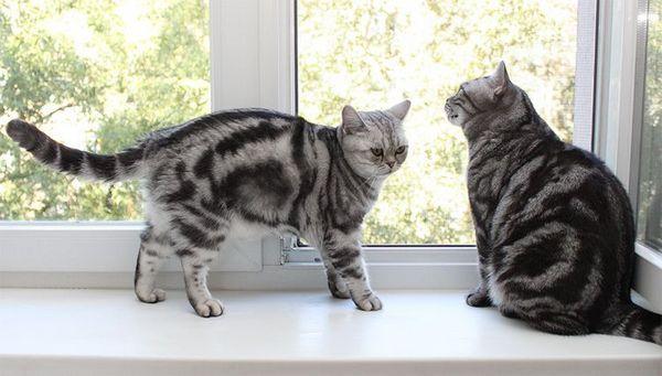 Кішки на підвіконні