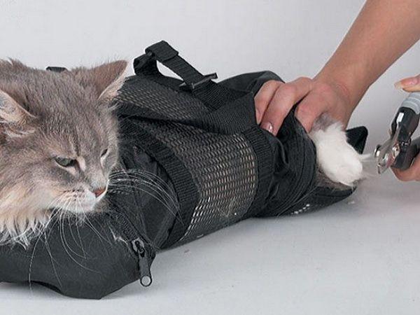 Як підстригти кішці кігті